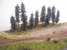 Waldstück bei der Weiche