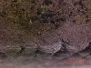 Waldboden mit der Abbruchkante